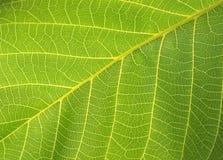 Groen blad. macro Royalty-vrije Stock Afbeelding