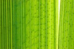 Groen blad macroschot Stock Afbeeldingen