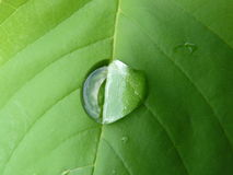 Groen blad met daling van water Stock Fotografie