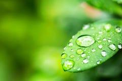 Groen blad met dalingen Stock Foto's