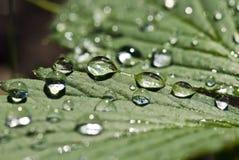 Groen blad met dalingen Royalty-vrije Stock Afbeelding