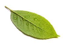 Groen blad met dalingen royalty-vrije stock afbeeldingen
