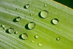 Groen blad met dalingen van water Stock Afbeelding