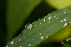Groen blad met dalingen van water Royalty-vrije Stock Foto