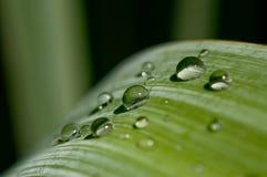 Groen blad met dalingen van water Stock Foto