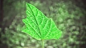 Groen blad met de donkergroene achtergrond van de bokehaard stock foto's