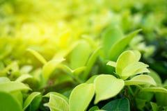 Groen blad met exemplaar ruimtegebruik voor ontwerpconcept Stock Afbeeldingen