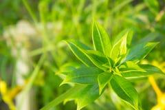 Groen blad met natuurlijke achtergrond Stock Afbeelding
