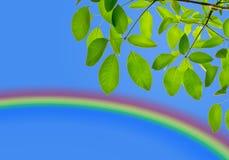 Groen blad met regenboog Stock Fotografie