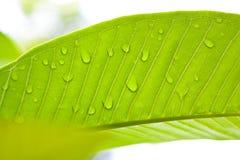 Groen blad met voor achtergrond Royalty-vrije Stock Fotografie