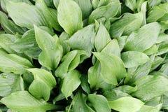 Groen blad met water hierboven dalingen, hoogste mening van Stock Foto's