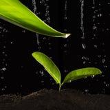 Groen blad met waterdaling Royalty-vrije Stock Afbeelding
