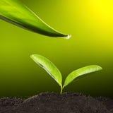 Groen blad met waterdaling Stock Afbeelding