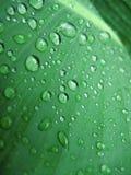 groen blad met waterdalingen Royalty-vrije Stock Fotografie