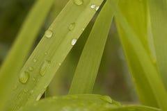 groen blad met waterdalingen Stock Fotografie