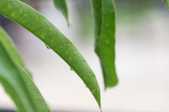 groen blad met waterdalingen Royalty-vrije Stock Foto's