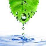 Groen blad met waterdalingen en geïsoleerdeo plons Royalty-vrije Stock Foto's