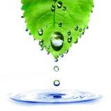 Groen blad met waterdalingen en geïsoleerdeo plons Royalty-vrije Stock Afbeelding