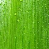 groen blad met waterdalingen Natuurlijke achtergrondtextuur Stock Afbeelding
