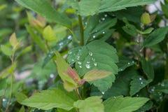 groen blad met waterdalingen stock afbeeldingen