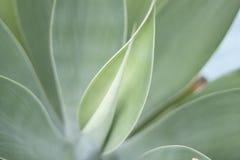 Groen Blad, Natuurlijke Installatie Stock Fotografie