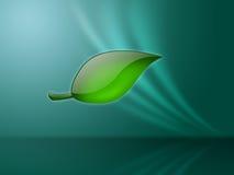 Groen blad op aquaachtergrond Stock Afbeelding