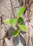 Groen blad op boom stock fotografie