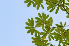 Groen blad op boomtak Royalty-vrije Stock Afbeeldingen