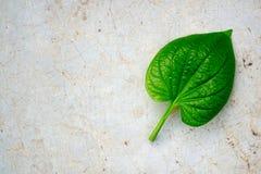 Groen blad op cementvloer Stock Foto's