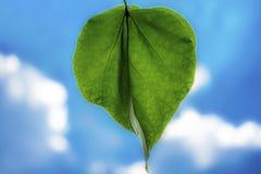 Groen blad op de hemelachtergrond Stock Foto