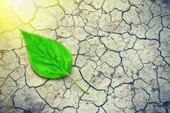 Groen blad op de oppervlakte van het droge gebarsten land in de stralen van de zon Milieu ramp Streng droogte en gebrek aan vocht Stock Afbeeldingen