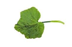 Groen blad op een wit Royalty-vrije Stock Foto
