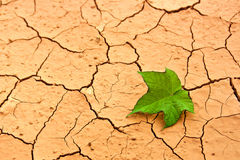Groen blad op gebarsten grond Stock Foto