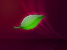 Groen blad op magenta achtergrond Stock Afbeelding
