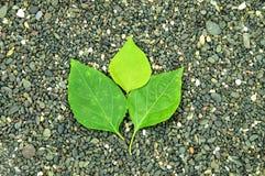 Groen blad op steenachtergrond Stock Foto's