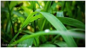 Groen blad op waterdalingen Stock Fotografie