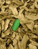 Groen Blad op Zwarte & Witte achtergrond Royalty-vrije Stock Afbeelding