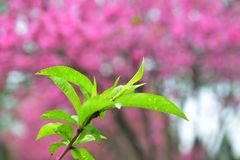 Groen blad tegen rode achtergrond stock foto