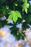 Groen blad uit nadrukachtergrond Stock Fotografie