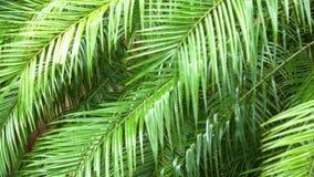 Groen blad van palm in dalende regen stock video