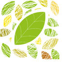 Groen blad. Vector achtergrond Stock Afbeeldingen