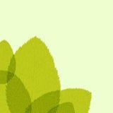 Groen blad. Vector illustratie Stock Afbeeldingen