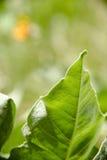 Groen blad in zonlicht stock afbeeldingen