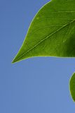 Groen blad in zonneschijn Royalty-vrije Stock Foto's
