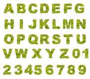 Groen bladalfabet Stock Afbeeldingen