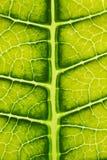 Groen bladclose-up Royalty-vrije Stock Afbeeldingen