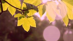 Groen bladclose-up op een vage grijze achtergrond met zonneverlichting stock video