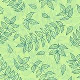 Groen bladeren naadloos patroon. Stock Afbeelding