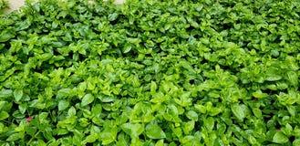 Groen bladerenbed stock afbeelding