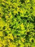 Groen bladerenbehang royalty-vrije stock afbeelding